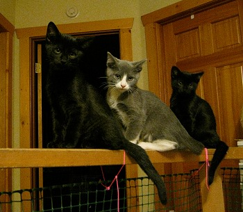 Three kitties on the railing