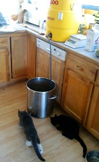 Sparging with kittens