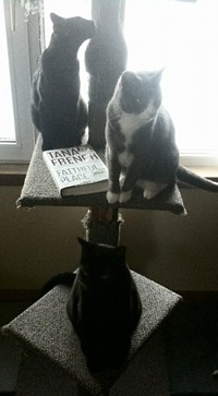 Cats on the cat tree