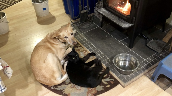 Monte and Tallys enjoing the wood stove